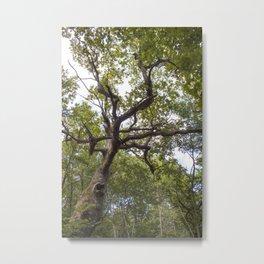 Oak Metal Print
