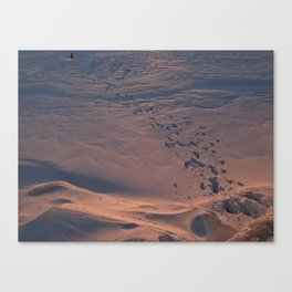 A Conversation With Snow #2 Canvas Print