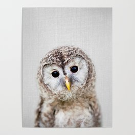 Baby Owl - Colorful Poster