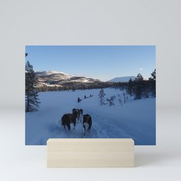 Dog sledging in Scandinavia Mini Art Print