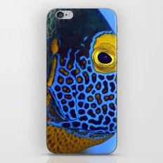Blue-faced Angelfish iPhone & iPod Skin