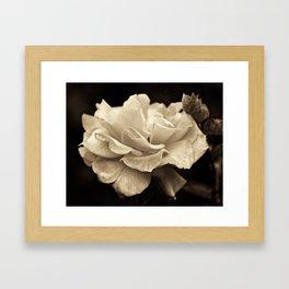 Second Hand Rose Framed Art Print