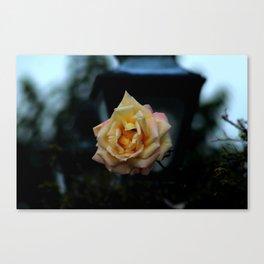 Victorian Garden Rose Canvas Print