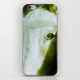 Irish Field Horses iPhone Skin