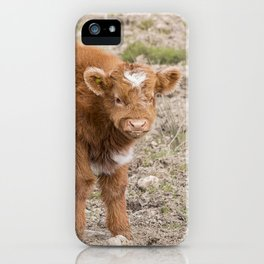 Scottish highlands baby cow iPhone Case