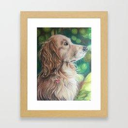 Regal Golden Retriever Framed Art Print