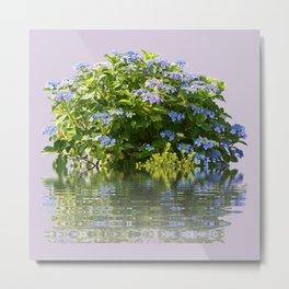 Hydrangea on Lavender Metal Print