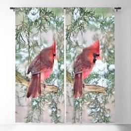 Snow Day Cardinal Blackout Curtain