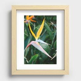 Bird of Paradise Recessed Framed Print