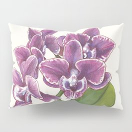 Purple Phalaenopsis Orchid Pillow Sham