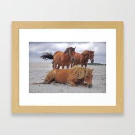 Wild Ponies At The Beach Framed Art Print