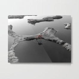 wild flamingo Metal Print