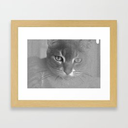Stare Down Framed Art Print