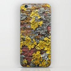 Colorful bark iPhone & iPod Skin