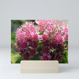 Sedum Flowers and the Ant Mini Art Print