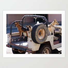 Jeep Dogs Art Print