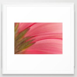 Under Gerbera Framed Art Print