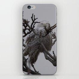 Snowy Owl in Tree iPhone Skin