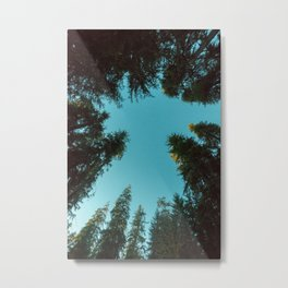 Turquoise Forest Sky Pacific Northwest Woods - Nature Photography Metal Print