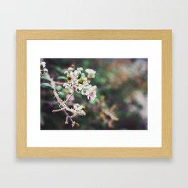 Rubus Framed Art Print