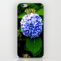 Blue Flower (Edited) iPhone & iPod Skin
