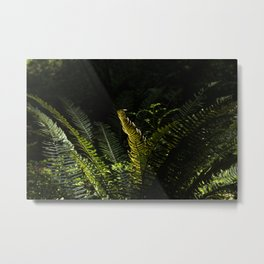 Sawtooth Fern Illuminated by Light in Oregon Forest Metal Print