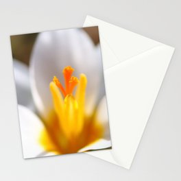 Crocus stamen in selective focus Stationery Cards