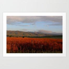 Sunrise reeds Art Print