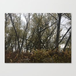 in the willows Canvas Print