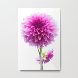 Cloudy Day Dahlia Metal Print