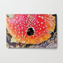 Fly amanita mushroom Metal Print
