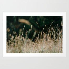 Sunkissed Grass Art Print