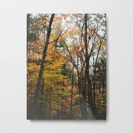 scrambled in branches Metal Print