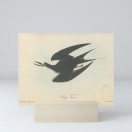 Vintage Print - Birds of America (1840) - Sooty Tern Mini Art Print