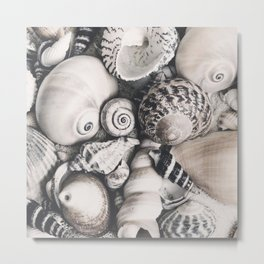 Sea Shell Collection vintage style monochrome Metal Print