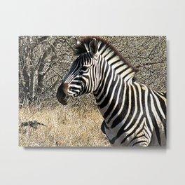 Zebra Face Animal Portrait 3 Metal Print