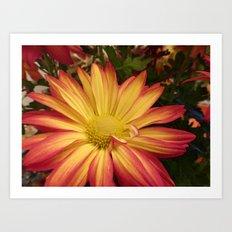Fiery Flower Art Print