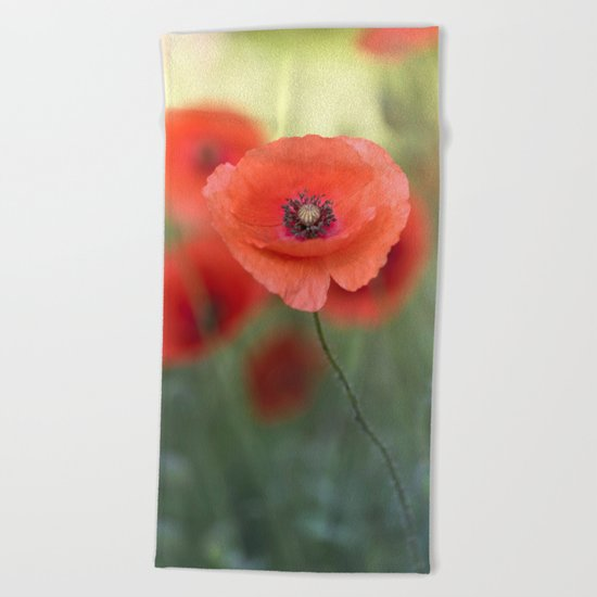 Beautiful poppy in a meadow Beach Towel