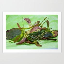 Nature Autumnal Souvenir Photography Art Print