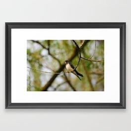 Swallow Framed Art Print