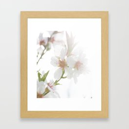 Blossom of the almond tree Framed Art Print