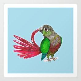 Preening green cheek conure Art Print