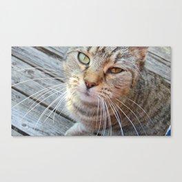 Cat Photography Canvas Print