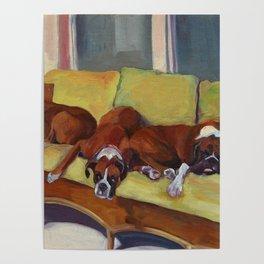 Boxer Dog Siesta Poster