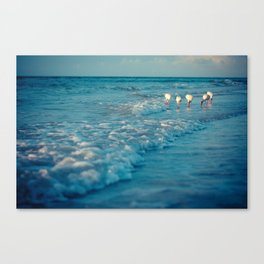 Five Sanibel Ibis Birds Canvas Print