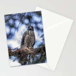 Young Raptor Stationery Cards