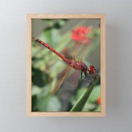 Red Skimmer or Firecracker Dragonfly Framed Mini Art Print