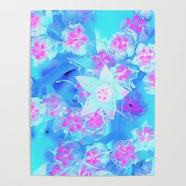 Blue and Hot Pink Succulent Underwater Sedum Flowers Poster