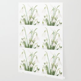white snowdrop flower watercolor Wallpaper