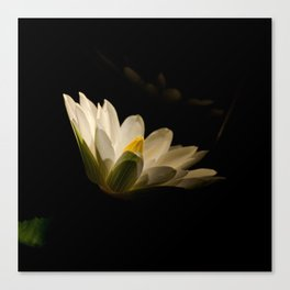Spotlight on Waterlily Nature / Floral Night Photo Canvas Print